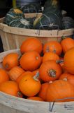 Small Pumpkins. A lot of red pumpkins on street market red and green Royalty Free Stock Photos