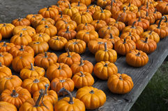 Small pumpkins. Stock Photo