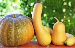 Small pumpkins . Stock Photos