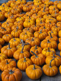 Small pumpkins Royalty Free Stock Photography