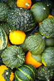 Small pumpkins Royalty Free Stock Image