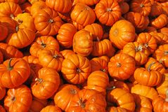 Small Pumpkins Stock Images