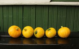 Small pumpkins on a bench near a wooden wall royalty free stock image