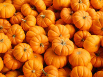 Small pumpkins Stock Photography