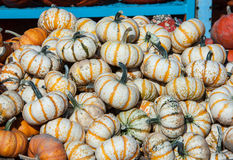 Small Pumpkins Stock Photo