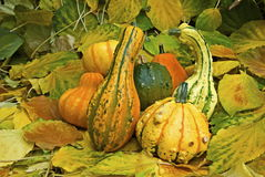 Small pumpkins Stock Image