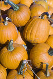 Small pumpkins at farmers market. Pumpkins in a bin at the farmers market Stock Photography