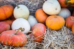 Small pumpkins at the Farmers market. Royalty Free Stock Image
