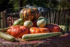 Small pumpkins at the Farmers market. Royalty Free Stock Images