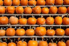 Small pumpkins at the Farmers market. Stock Photos