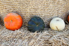 Small pumpkins at the Farmers market. Stock Images