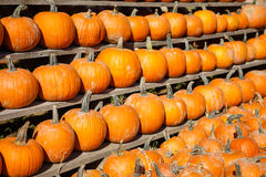 Small pumpkins at the Farmers market. Stock Photography