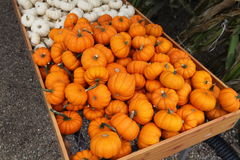 Small pumpkins or gourds. A bin or container of small decorative pumpkins or gourds Stock Photo