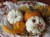 Small pumpkins and gourds of various colors, displayed on platters from various angles and depth. Orange and white pumpkins with gourds of different colors on royalty free stock photo