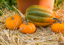 Small Pumpkins on Hay Bale Stock Photography