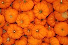 Small Pumpkins Stock Photography
