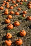 Small pumpkins for sale on a farm near Salem, Oregonm, Oregon stock photos