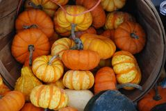 Small pumpkins and squash in a basket for sale. A bushel basket of small decorative pumpkins and squash sit on a farmer& x27;s market table for sale Royalty Free Stock Photography