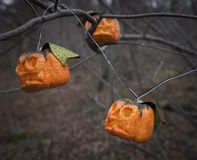 Small pumpkins on the tree branches Royalty Free Stock Photography