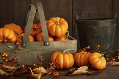 Small pumpkins in wooden box with leaves Stock Images
