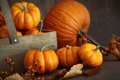 Small pumpkins with wooden box Stock Photo