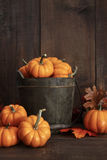 Small pumpkins in wooden bucket Royalty Free Stock Photos