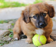 Small puppy Stock Image