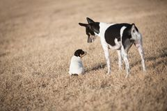 Small puppy and dog in yard stock photos