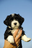 Small puppy in hand Stock Photos