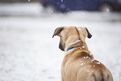 Small puppy looks toward the street. Standing in the snow Royalty Free Stock Photo