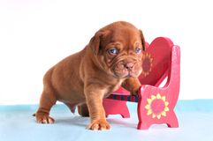 Small Puppy in Love Stock Photo
