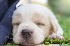 Small puppy outdoors on a sunny day sleeping stock images