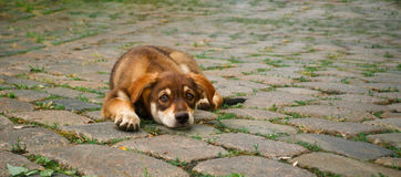 Small puppy on pavement Stock Image