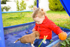 Small puppy is pulling beutiful small girl by the trousers Royalty Free Stock Images