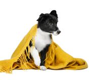 Free Small Puppy Sits Under An Orange Blanket, His Eyes Sad. Background Isolated Stock Images - 176691544