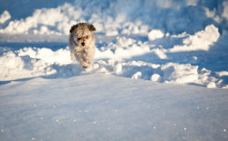 Small puppy in snow Royalty Free Stock Images