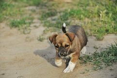 Small puppy Stock Images