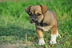 Small puppy Stock Photos