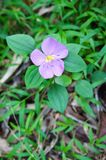 Small Purple Flower in Green Coat Royalty Free Stock Photos