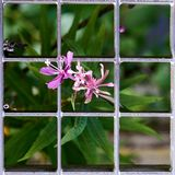 Small purple flower growing by a grid stock image