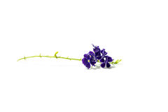 The small purple flower isolated Royalty Free Stock Photos