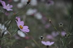 Small purple flowers on cloudy autumn day stock image