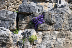 Small purple flowers Stock Image