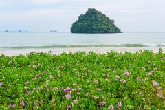 Small purple flowers on a sandy beach in the tropics. View of the sea and the rock Royalty Free Stock Photo