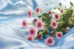 Small purple flowers on sky blue satin Royalty Free Stock Photos
