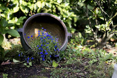 Small purple flowers in a tipped over flower pot. On the ground royalty free stock photography