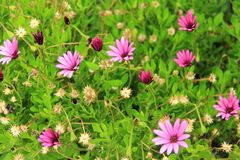 Small purple wild flowers Stock Images