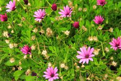 Small purple wild flowers Royalty Free Stock Images
