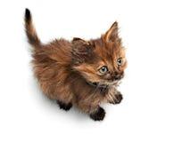 Small pussy cat Stock Photos