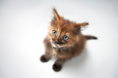 Small pussy cat Stock Photography